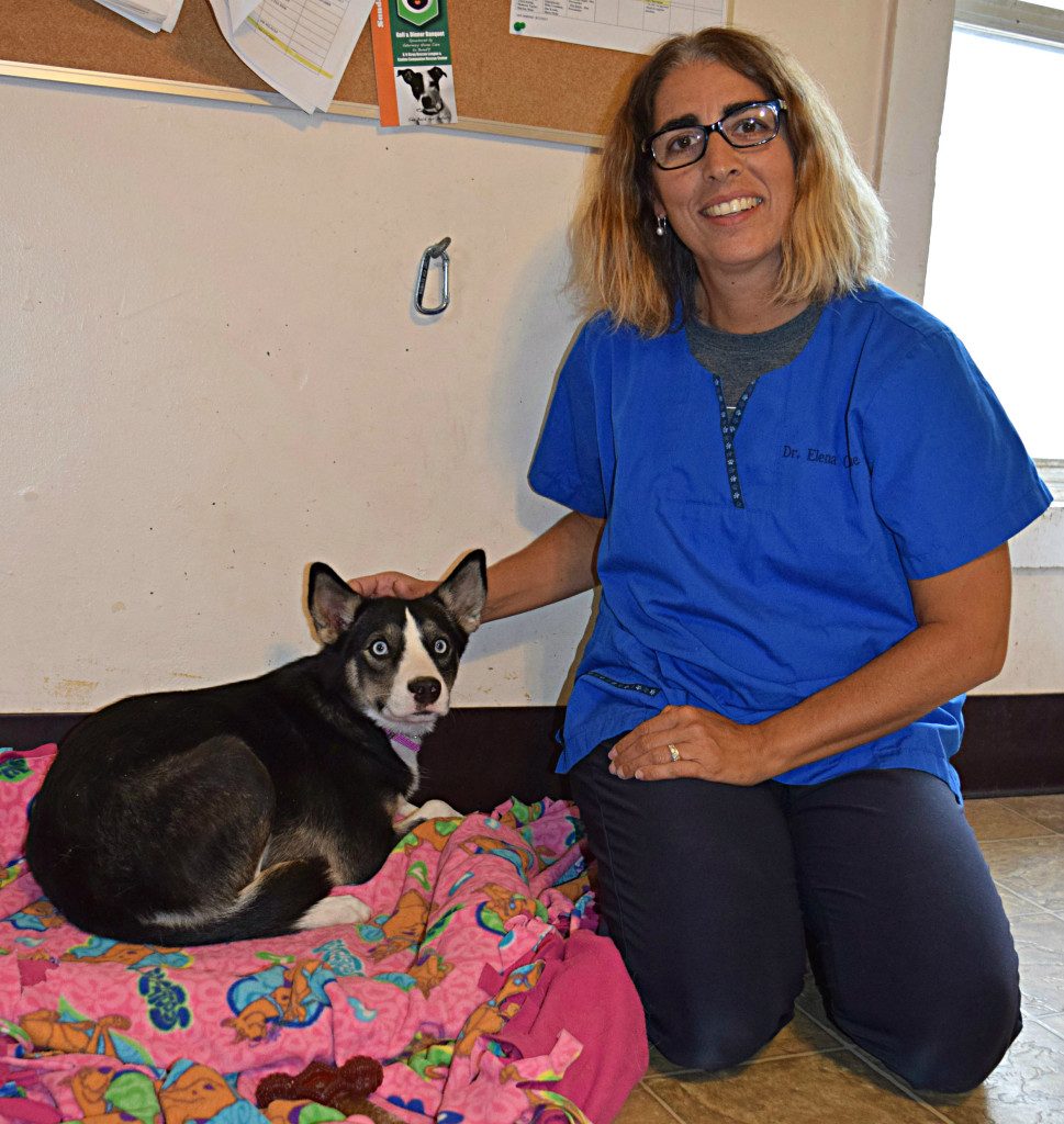 Dr. Elena Osborne poses with Leia, a young adult husky mix who is looking for her forever home. She is up for adoption at the K-9 Stray Rescue League in Oxford. Photo by Elise Shire.