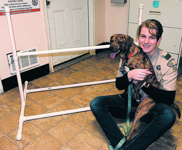 Scout's project helps rescue dogs