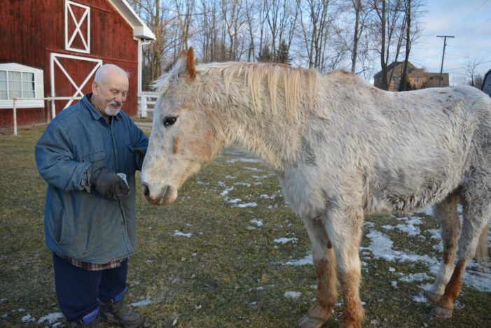 Saving Eli: Community rallies to rescue 27-year-old horse from ditch