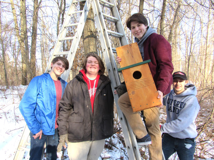 Screech Owl houses for Eagle Scout