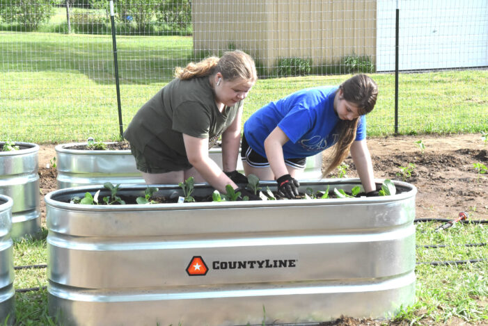Oxford Twp. Community garden planted,  growing