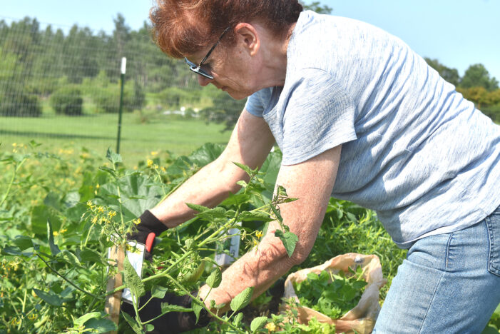 Community Garden feeds those in need